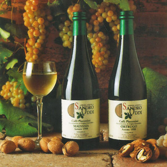 il viandante sandro oddi i vini bianchi
